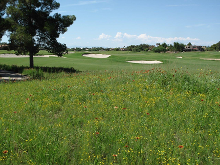 GolfCourseVegetation