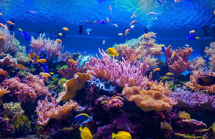 Nanotechnologia koralowiec