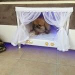 łóżeczko dla psa