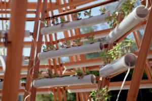 Rewolucyjne szklarnie - pływająca szklarnia