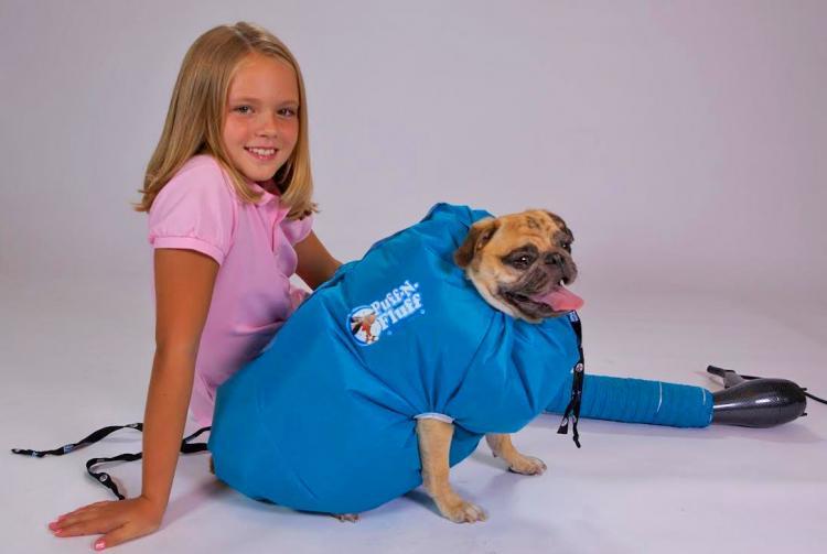 puff-n-fluff-dog-dryer-1083